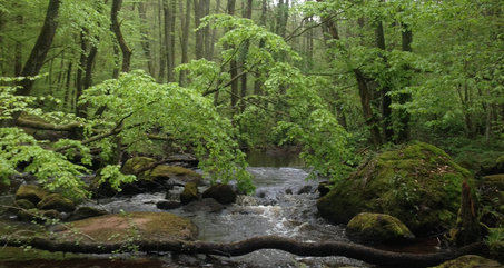 The river south of the castle flows along fine beech forest.