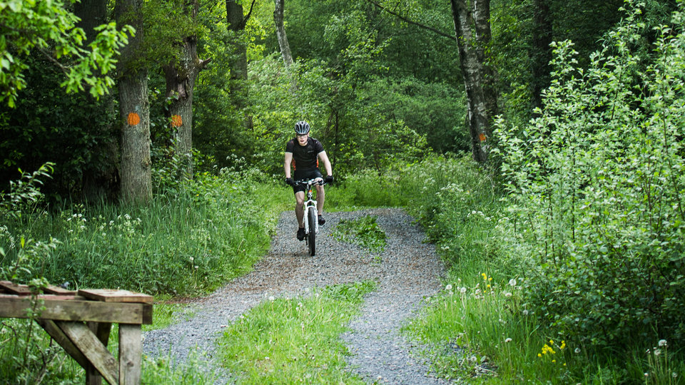 A cyclist comes on a nice road through a forest.