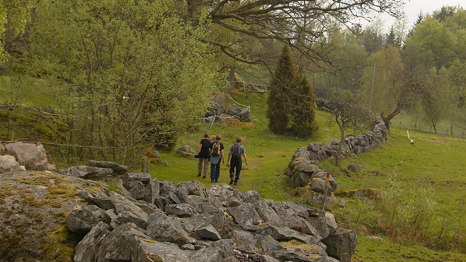 Hikers on trail Vieåleden pass a pasture with many stone walls around.
