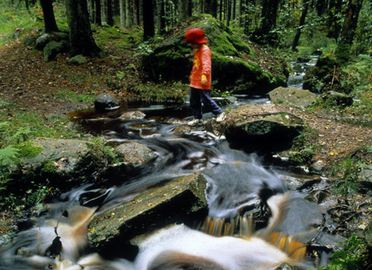 A child passes a stream with lots of stones and little water in magical forest.