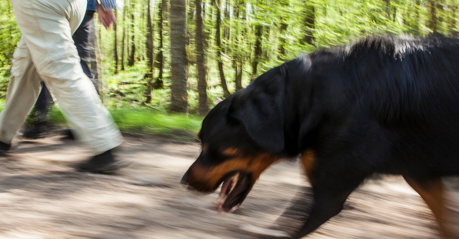 A big dog with its owner on a walk in the forest